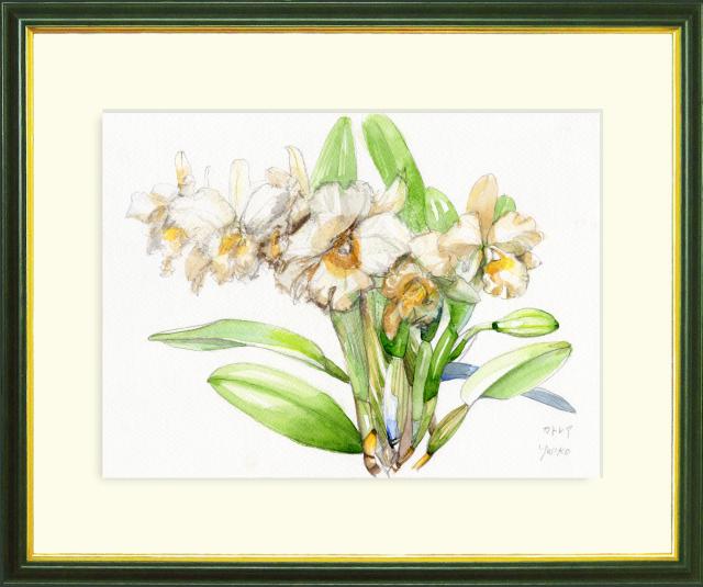 志村好子「カトレア(白)」水彩画(絵寸252×332・額寸347×423mm)