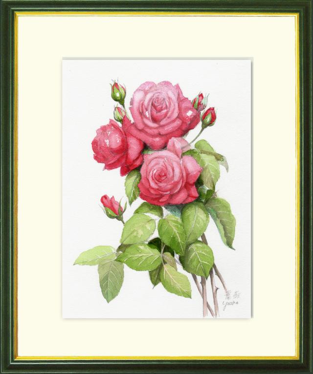 志村好子「薔薇(赤)」水彩画(絵寸250×330・額寸347×423mm)